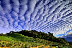 馬鞍山茶園高積雲